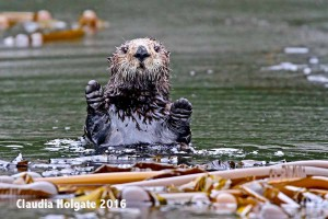1S8A5873 otter stop_edited-1 sml