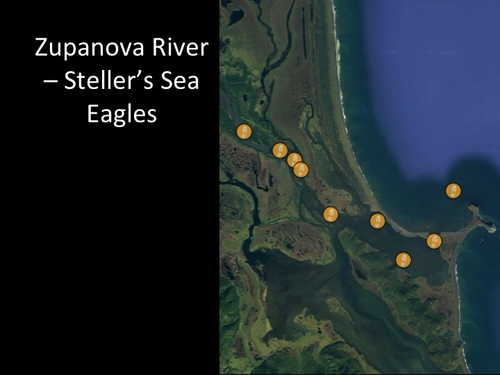 Our path up the Zupanova River to find the Steller's Sea Eagle